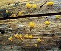 Fungi, Cascade Range 2.jpg