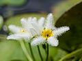Furry flowers (14937451745).jpg