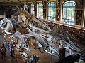 Galerie de paléontologie et d'anatomie comparée.jpg