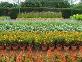 Garden flowersss.JPG