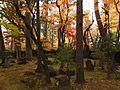 Garden in Kawarada Samurai House.jpg