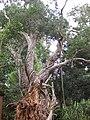 Gardenology.org-IMG 2514 rbgs11jan.jpg