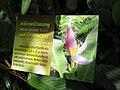 Gardenology.org-IMG 7552 qsbg11mar.jpg