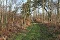 Gateforth Wood - geograph.org.uk - 655954.jpg