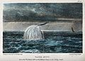 Geography; a water spout in the Atlantic Ocean. Coloured lit Wellcome V0025145.jpg