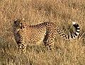 Gepard23B.jpg