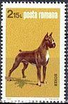 German-Boxer-Canis-lupus-familiaris Romania 1981.jpg