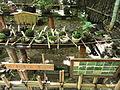 Giō-ji - Kyoto - DSC06278.JPG