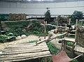 Giant Panda Conservation Centre in Zoo Negara Malaysia 2021 (20).jpg