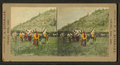 Gift horses being presented, by Rinehart, F. A. (Frank A.).png