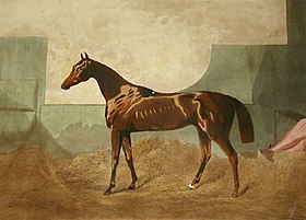 Image illustrative de l'article Gladiateur (cheval)