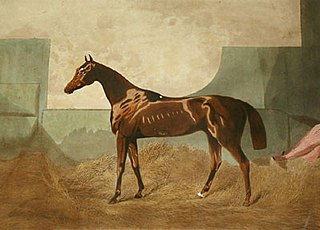 Gladiateur French-bred Thoroughbred racehorse