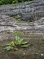 Gletscherschliff6.jpg