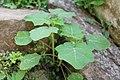 Godawari Botanical Garden (184).jpg