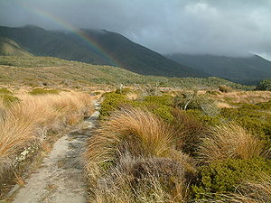 Heaphy Track - The Gouland Downs