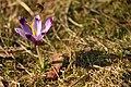 Gradina Botanica (6993941133).jpg