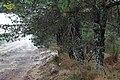 Gralhas, 5470, Portugal - panoramio (7).jpg