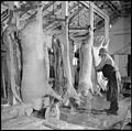 Granada Relocation Center, Amache, Colorado. Slaughter house at the project farm. A total of near . . . - NARA - 539955.jpg