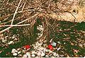 Great Bower Bird's Bower near Cooktown.jpeg