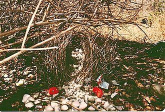 Great bowerbird - Image: Great Bower Bird's Bower near Cooktown