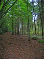 Great Dern Wood - geograph.org.uk - 267593.jpg