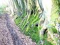 Greensand Way by Brook - geograph.org.uk - 1172651.jpg