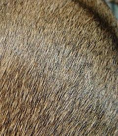 dog fur color