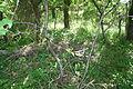 Großsteingrab Dwasieden 08.JPG