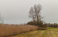 Groep bomen in natuurgebied in De Twigen 02.jpg