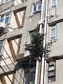 HK SW 上環 Sheung Wan 太平山街 Tai Ping Shan Street 差館上街 15 Upper Station Street 太山樓 Tai Shan House 去水渠 Drain pipe green tree April 2020 SS2 02.jpg