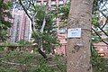 HK Shatin Park 沙田公園 September 2019 IX2 07.jpg