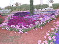 Haifa International Flower Exhibition P1130977.JPG