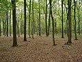 Hambach forest 24.jpg