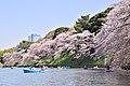 Hanami in Chidorigafuchi (45966829985).jpg