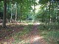 Hanger's Wood - geograph.org.uk - 69033.jpg