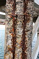 Haría Arrieta - Calle de la Playa - Pier 07 ies.jpg