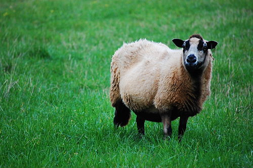 Hello, how are ewe today?