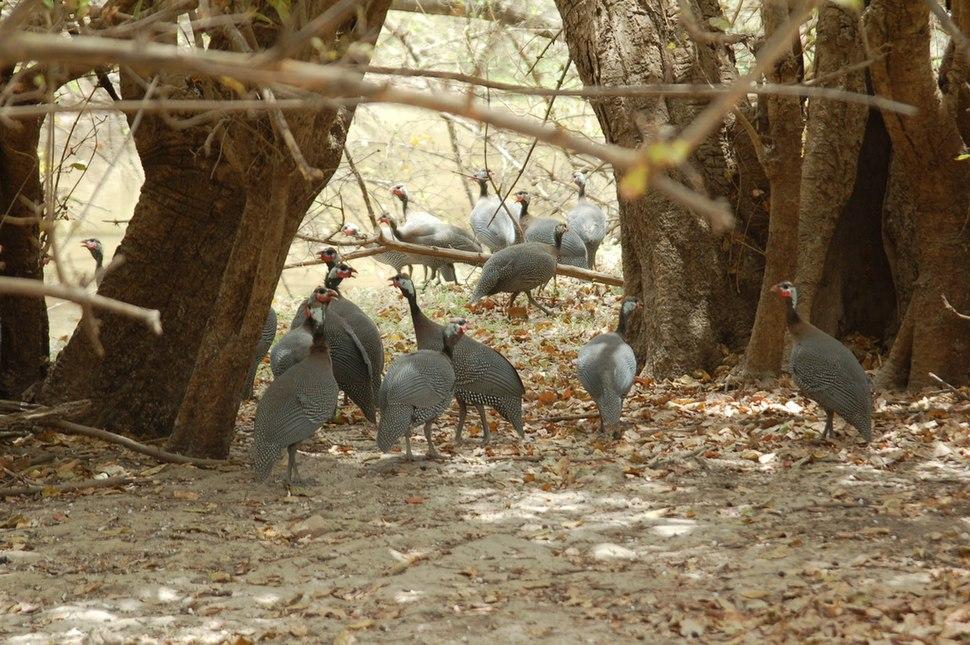 Hens Niger parkw 2006