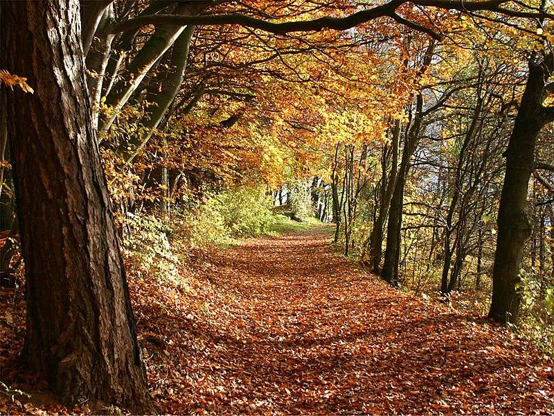 Datei:Herbst.jpg