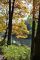 Herbst - 1.jpg