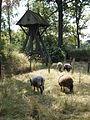 Het armen kerkhof met geiten. Harkema.JPG