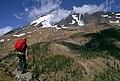 Hiker viewing Mt Adams Gifford Pinchot National Forest (36361178633).jpg