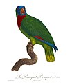 Histoire naturelle des perroquets (9949654284).jpg