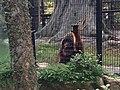 Hong Kong Zoological and Botanical Gardens 13.jpg