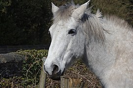 Horse at Cottage Farm, Little Crosby.jpg