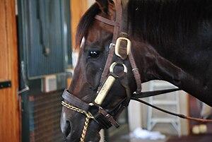 WinStar Farm - Paynter, July 2015