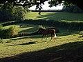 Horses near Rora House - geograph.org.uk - 563676.jpg
