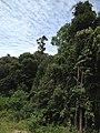 Hutan Alam Mandi Angin Minas Riau 04.jpg
