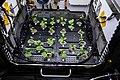 ISS-64 Radish plants in the Plant Habitat-02 experiment (1).jpg