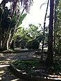 Iguape - SP - panoramio (285).jpg